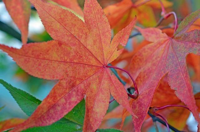 autumn-63434_640.jpg