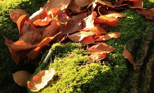 autumn-63450_640.jpg