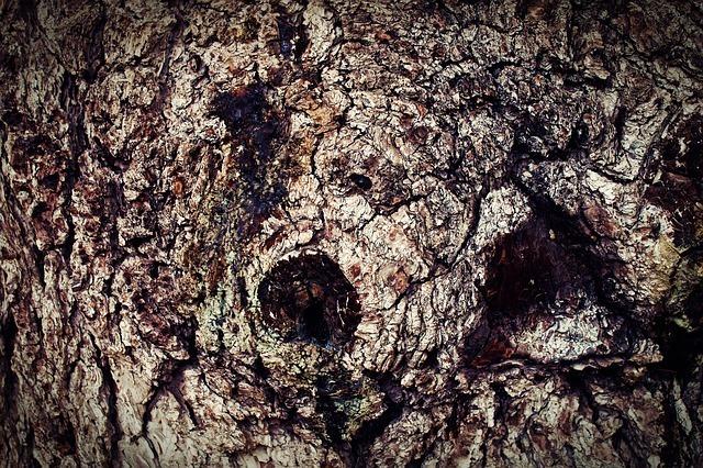 bark-63574_640.jpg