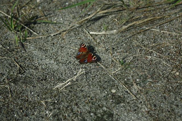 butterfly-54179_640.jpg