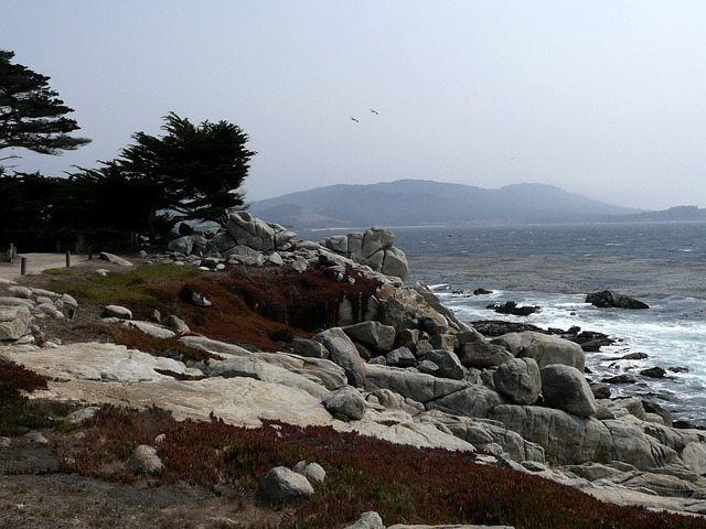 california-53941_640.jpg