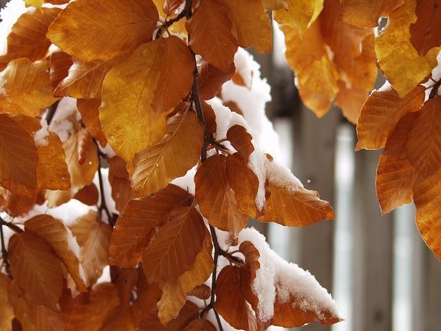 leaves-63438_640.jpg