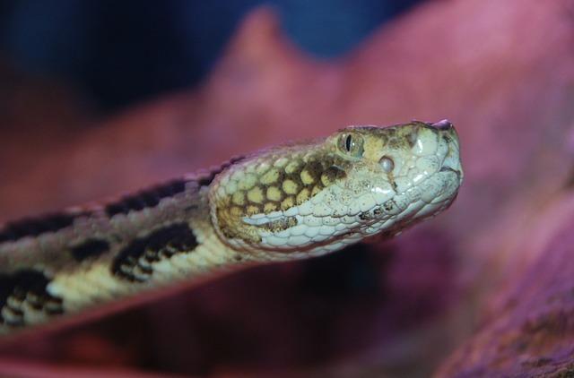 snake-63535_640.jpg
