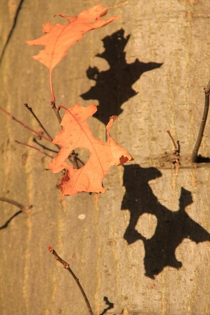 tree-63504_640.jpg